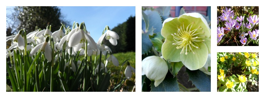 spring-flowers-collage-2