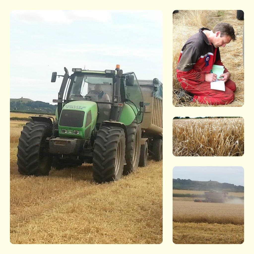 2014-harvest-jpg-1024x1024